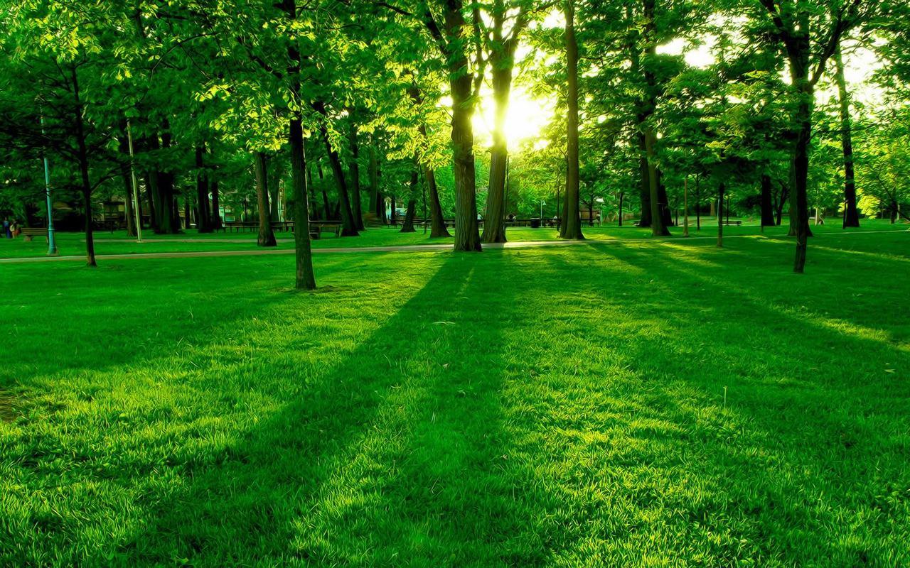 alberi sole natura Centro Natura