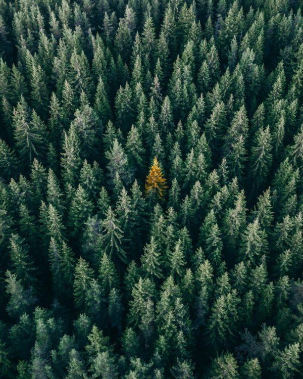 Foresta fitta