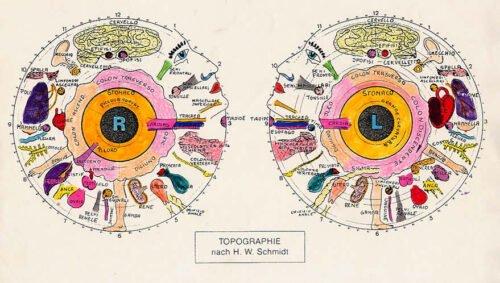 iridologo